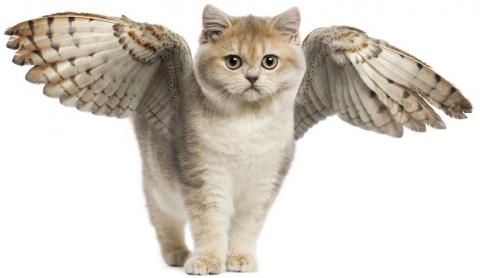 Крылатые кошки, оказывается,…