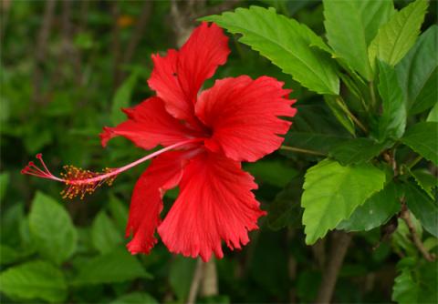 Домашние растения, приносящие счастье и благополучие