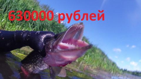 Щука стоимостью 630000 рублей! Вот так порыбачил!