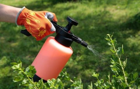 Как правильно проводить летние жидкие подкормки сада