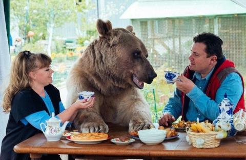 Огромный медведь живёт в русской семье в качестве домашнего животного