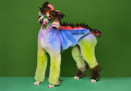"""Стрит-арт"" на собаках!Груминг на грани искусства!"