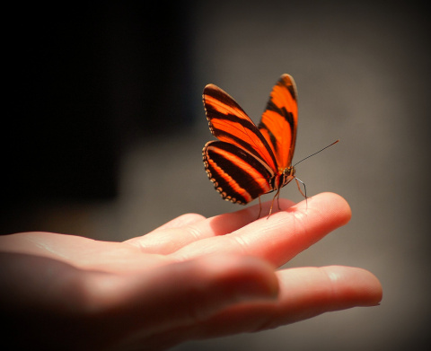 """Философская притча """"Урок бабочки"""""""