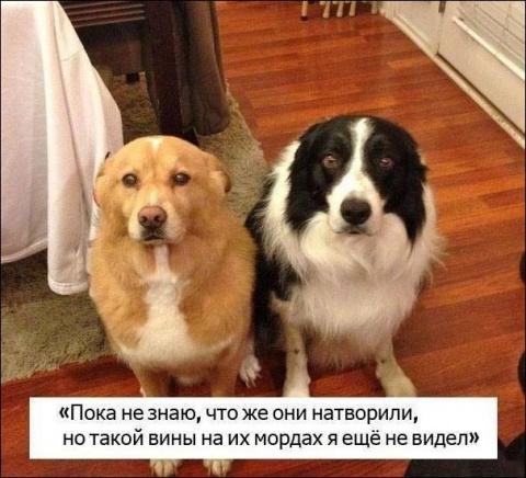 25 домашних животных застигн…