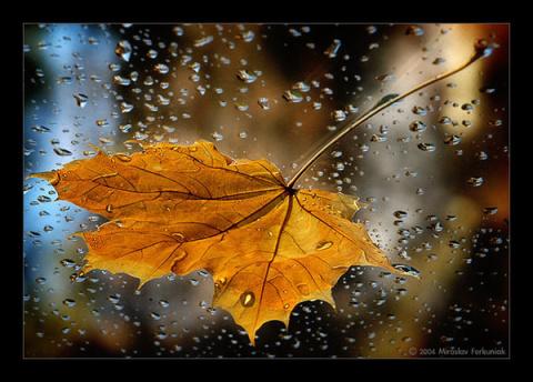 Из раннего. Осенний лист