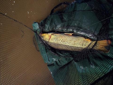 Тактика прикармливания и ловли сазана на течении