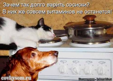 Кулинарные котоматрицы 38