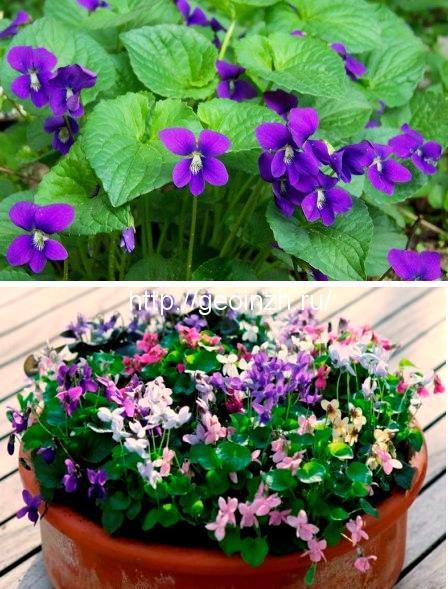 Весенние цветы для украшения сада