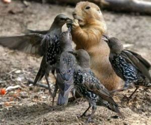 Чем защитить урожай от птиц