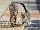 Интересные факты про кошачий…