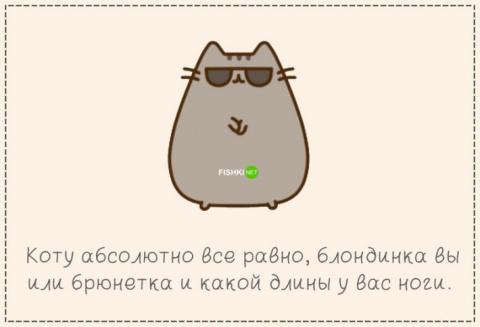 """Кот вместо мужа или 16 причин """"за"""""""