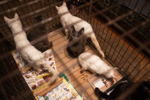 36 кошек в маленькой комнатк…