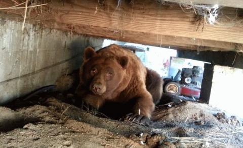 Бесценная реакция медведя на…