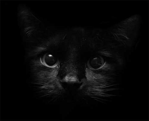 КОШКИН ДОМ. Поверья о черных кошках