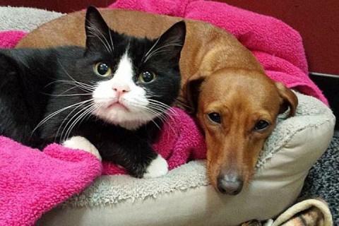 Кот помогает собаке справиться с нахлынувшими эмоциями