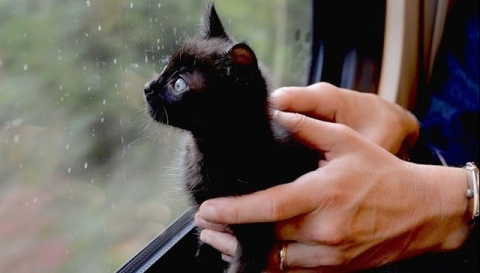 Котенку, найденному в мусоре…