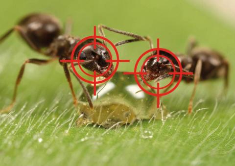 Выгнала муравьев с огорода з…