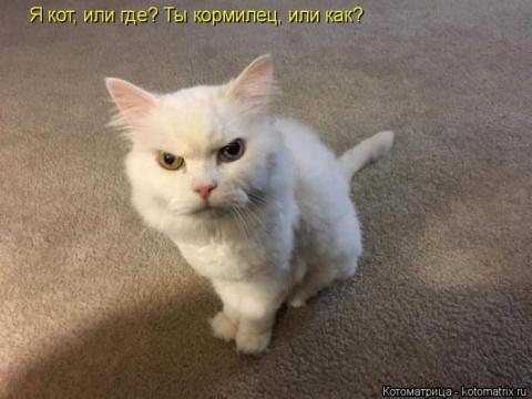 Представляем лучшие котоматр…