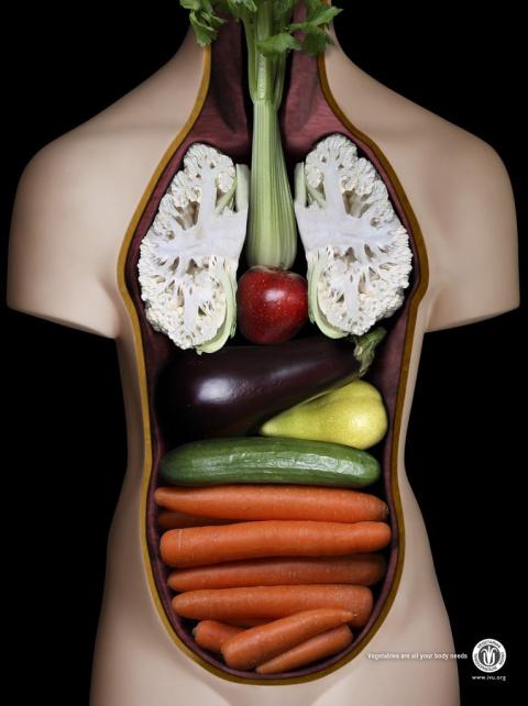 Выбирайте свой организм!