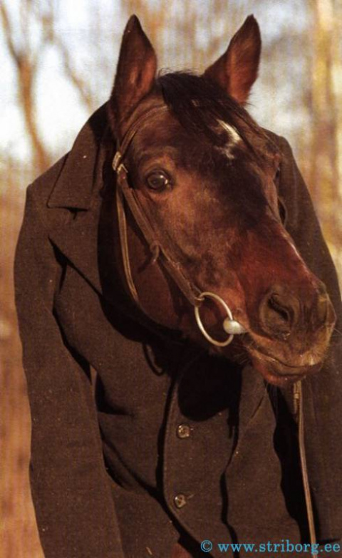 Kонь в пальто Конь