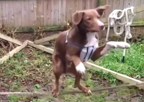 Пёс крут! Нечего сказать (видео)