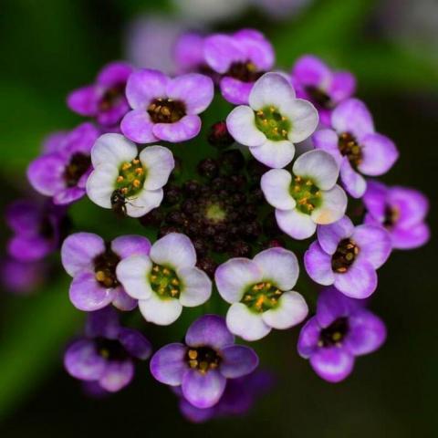 Как сделать сад душистым