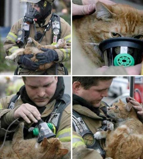 Спасенные жизни