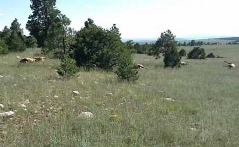 В Нью-Мексико нечто убило 120 оленей рядом с кругом на полях