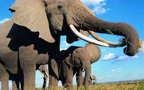 Они привязали слоненка к дер…