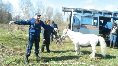 В Нижнем Тагиле спасатели вытащили из канализационного люка белого пони