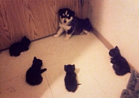 Когда между кошками и собака…