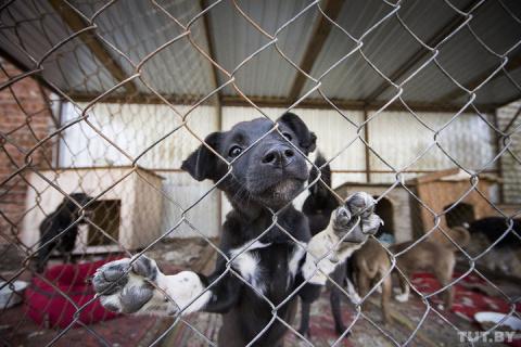"""""""Это подарок судьбы"""". Как 600 бездомным животным из Бреста нашли новые дома в Германии и Австрии"""