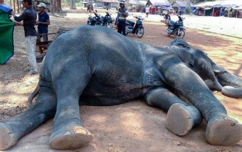 10 животных, которые заплатили высокую цену за глупость и жестокость туристов