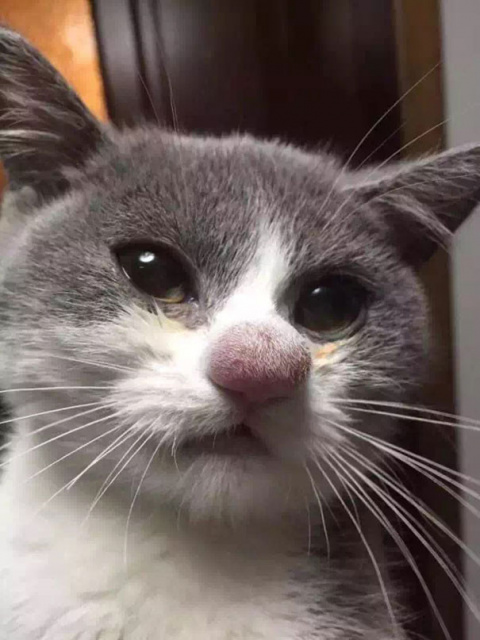 20 уморительных котов, ужале…