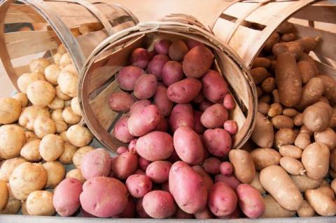 Антикризисный вариант - картошку не сажаем, а… сеем