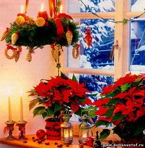 Пуансетия-Рождественская звезда.