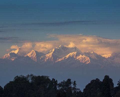 В 2015 году в Гималаях открыто 445 новых видов животных и растений