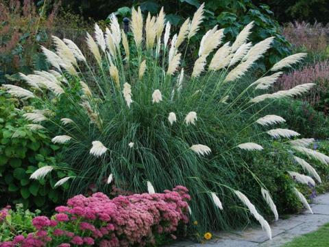 Какими декоративными травами украсить газон