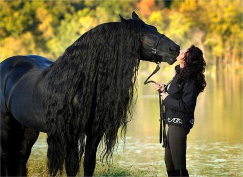 Фредерик Великий — самый красивый конь в мире, чья роскошная грива сводит людей с ума