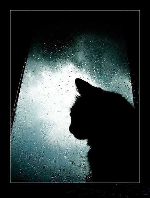 История про Кошку и её Человека  (Саша Беst)
