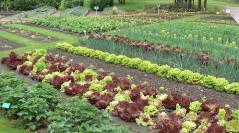 15 советов для садоводов. Пу…