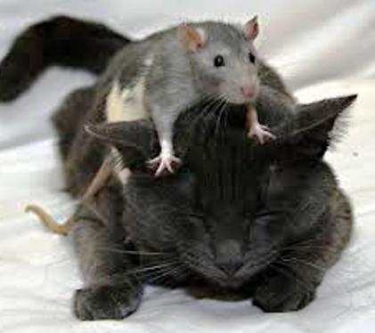 Милые факты о животных, кото…
