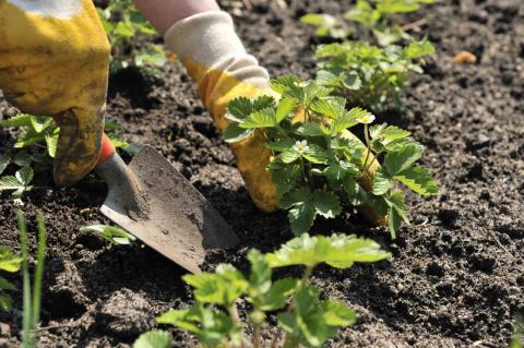 Чем удобрять огород весной?