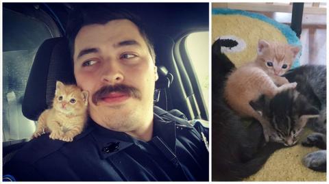 Полицейский приютил котенка …