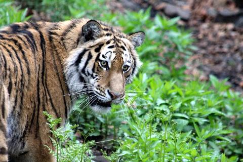 На Дне тигра во Владивостоке…