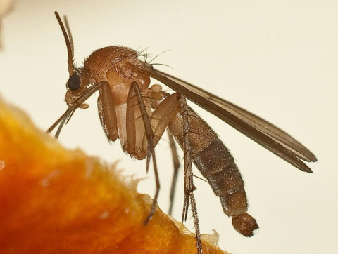 Избавляемся от комаров без я…