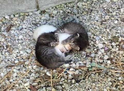 Братья-котята обняли свою се…