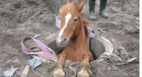 Спасатели помогли лошади выбраться из колодца
