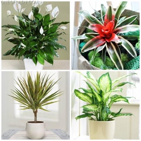 Каким домашним растениям не …