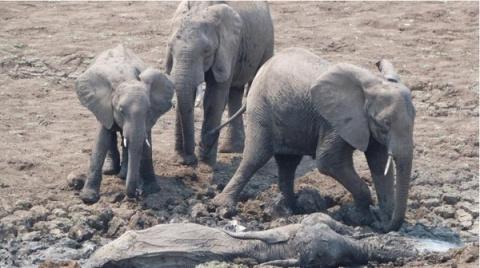 Спасение слоненка и его мамы.